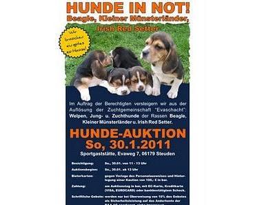 Hunde unterm Hammer - Tierschutz mitten in Deutschland
