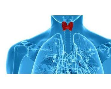 Die Schilddrüse: sie reguliert den Stoffwechsel