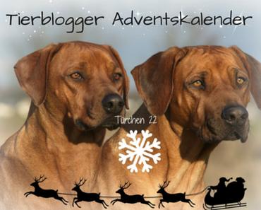 Tierblogger Adventskalender – Türchen 22