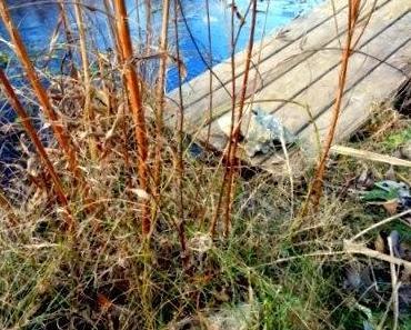 """Mein Garten im Jänner - der Frühling ist schon in den """"Startlöchern"""""""