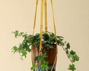 Schmale Vasen wollen die Elfer