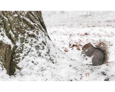 Ehrentag des Eichhörnchens – der amerikanische Squirrel Appreciation Day