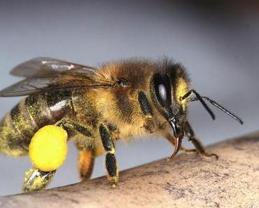Bienen, Honig und der Mensch