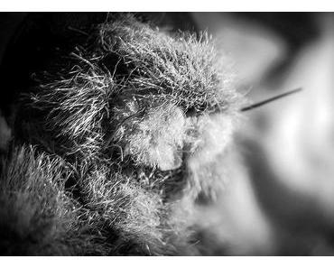 Groundhog Day – Der Tag des Murmeltiers