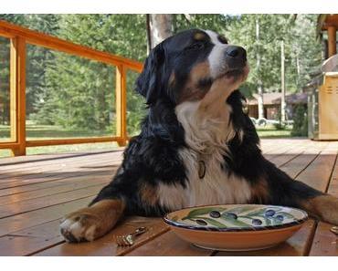 Futterfinder – 5 schnelle Tipps für die Hundefuttersuche