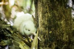 Zeit und Geld für Naturschutz in Neuseeland