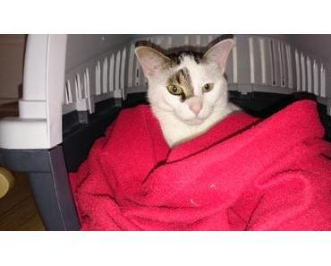 So kann man eine Katze an die Transportbox gewöhnen