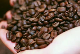 partnerangebot die geschichte des kaffee von kaffa bis barista. Black Bedroom Furniture Sets. Home Design Ideas