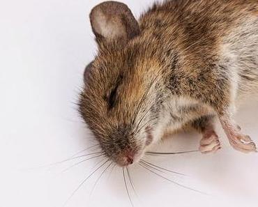 """Es ist echt """"zum Mäuse melken"""" - ewig diese stickige Luft im Büro! Bis zum Delirium?"""