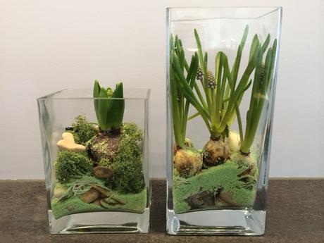 biologiestunde in der stube blumenzwiebeln im glas. Black Bedroom Furniture Sets. Home Design Ideas