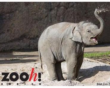 Famigros: Tierische Familientage im Zoo